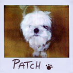 Portroids: Portroid of Patch DeMint